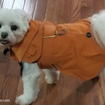Cute dog sweaters and jackets