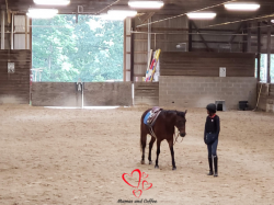 Equestrian Girl Forever